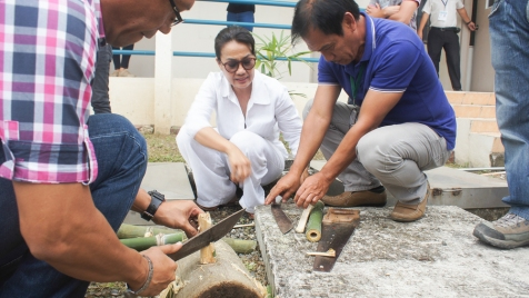 Bamboo Series-14