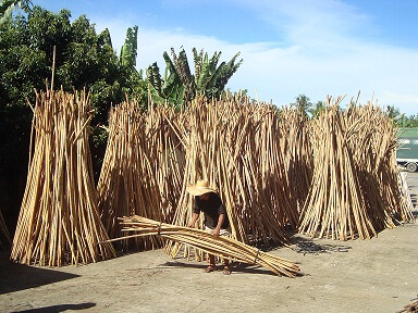 Rattan drying process at Catarman Industries Inc.