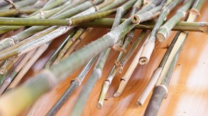 ekoSHARE Bamboo Series 4th Edition