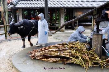 Sugar Cane Mill in Ryuku, Okinawa Prefecture, Japan (Source:www.ryukuheritagetextiles.com)