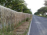 Jute fiber being dried alongside a road after retting (source:https://en.wikipedia.org/wiki/Jute)