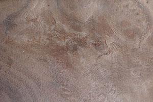 Walnut Burl Veneer by Pacific Traders