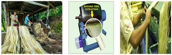Extraction of Banana Fiber